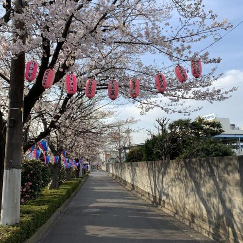 桜開花リレー 関東